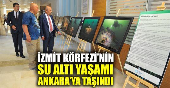 İzmit Körfezi'nin su altı yaşamı Ankara'ya taşındı