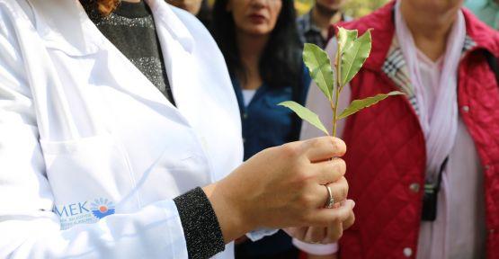 KO-MEK'ten tıbbi aromatik bitki yetiştiriciliğine tam destek