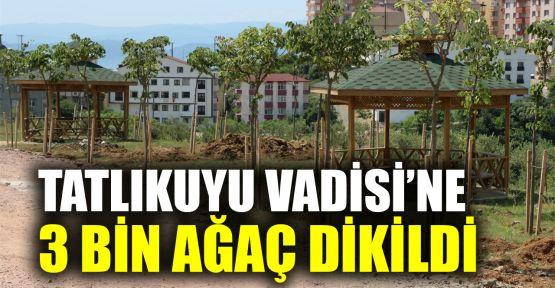Tatlıkuyu Vadisi 2. etabına 3 bin ağaç dikildi