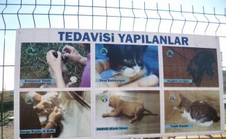 Bilecik'te 15 gönüllü, kurdukları barınakta sokak hayvanlarına bakıyor