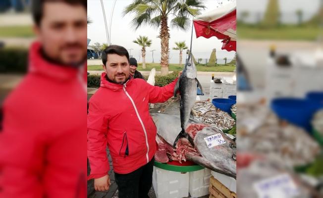 Kocaeli'de 380 kilogramlık balık ilgi odağı oldu