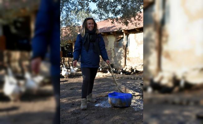 Yabancı gençler Türk kültürünü öğrenmek için çiftlikte gönüllü çalışıyor