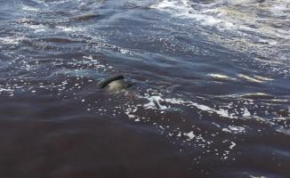Edirne'de kayıp kişinin cesedi nehirde bulundu