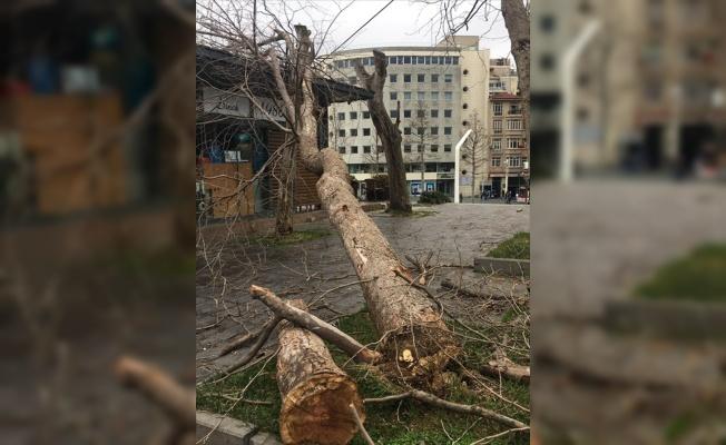 Gezi Parkı'nda kuruyan ağaçlar kaldırılıyor