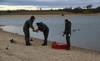 Kırklareli'nde kanatları kesilerek mühre olarak kullanılan ördekler korumaya alındı