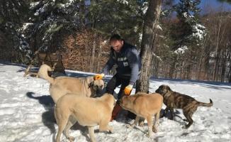 Uludağ'daki hayvanlara yiyecek desteği