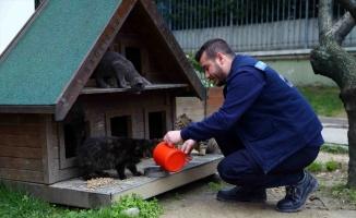 Bağcılar Belediyesinden sokak hayvanlarına yiyecek