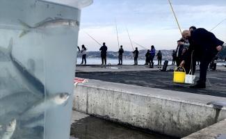 Beykoz'da balıkçılar sahile akın etti