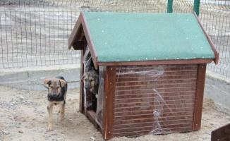 Çerkezköy OSB, hayvan barınağına kulübe ve mama yardımında bulundu