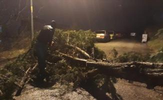 Kocaeli'de şiddetli rüzgar yaşamı olumsuz etkiledi