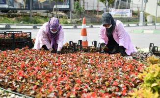 Çayırova'da mevsimlik çiçek dikimi ve yabani ot temizliği