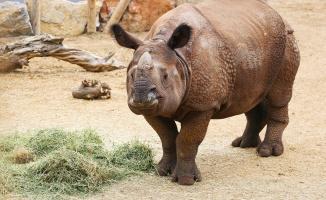 Faruk Yalçın Hayvanat Bahçesi ve Botanik Parkı kapılarını yeniden açıyor