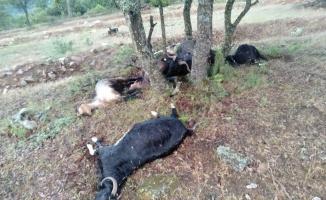 Yıldırım düşmesi sonucu 9 keçi telef oldu