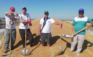 Çiftçiler buğday veriminden memnun