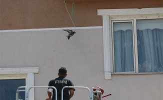 Kanadı ipe takılan güvercini itfaiye kurtardı
