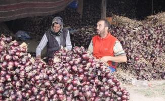 Sulu ve tatlı mor soğanın üreticileri hasat ve örme mesaisinde