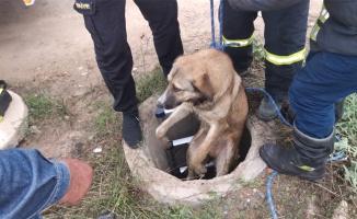 Gebze'de kuyuya düşen köpeği itfaiye ekipleri kurtardı