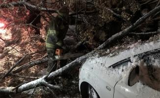 Kar yağışından devrilen ağaç iki otomobile zarar verdi