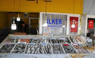 Tekirdağ'da deniz salyası nedeniyle avcılığın azalması hamsi ve istavritin fiyatını artırdı