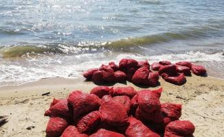 Edirne'de 875 kilogram kum midyesi ile yakalanan zanlılara 449 bin lira ceza