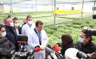 İstanbul'da yetiştirilen fideler çiftçilere hibe edilecek