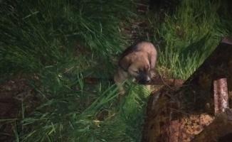 Sakarya'da 10 metrelik boş kuyuya düşen yavru köpeği itfaiye kurtardı