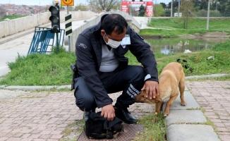 Tunca Nehri'ne atılan yavru köpek güvenlik görevlisinin dikkati sayesinde kurtuldu