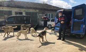 Bilecik'te jandarma ekipleri sokak hayvanlarını besledi