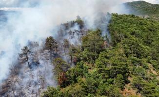 Balıkesir'de çıkan orman yangınında 3 hektarlık alan zarar gördü