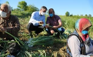 Kandıra Belediye Başkanı Adnan Turan, çiftçilerle pırasa hasadı yaptı