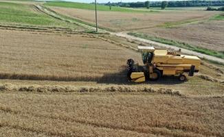 Buğday hasadına başlayan Edirneli çiftçinin yüzü, yüksek rekolteyle gülüyor