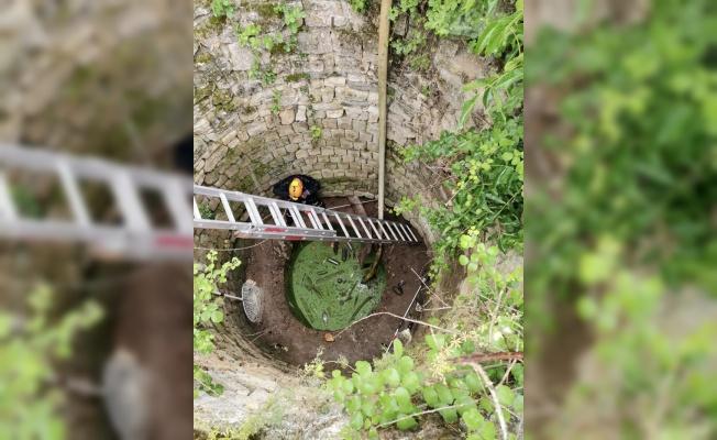 Kırklareli'nde su kuyusuna düşen çakal AFAD ekiplerince kurtarıldı
