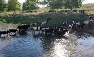 Edirne'de sıcak hava yaşamı olumsuz etkiliyor