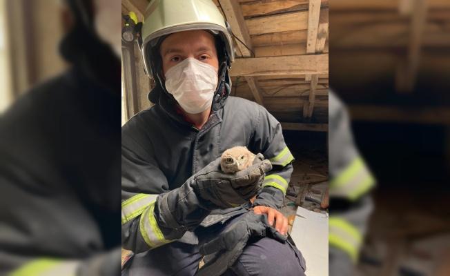 Kırklareli'nde çatı arasında mahsur kalan baykuş kurtarıldı