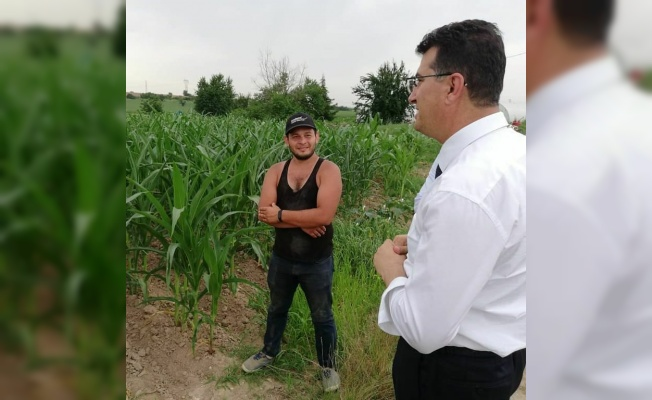 Kırklareli'nde yerli mısır çeşitlerinin verimliliği test edilecek