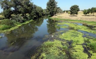 Debisi düşen Tunca Nehri'nde atılan çöpler ortaya çıktı