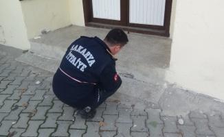 Sakarya'da evin temeline yuva yapan yılanlar itfaiye ekiplerince doğaya salındı