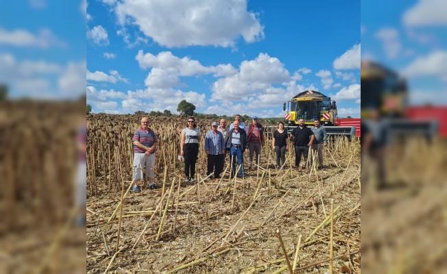 Vize'de demonstrasyon sahasına ekilen ayçiçeği hasat edildi