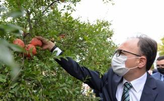 Belediye başkanları en fazla nar yemek ve nar suyu sıkmak için yarıştı