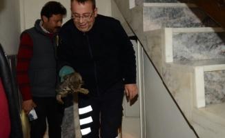 Bozüyük'te apartmanın bodrum katında sıkışan kedi kurtarıldı