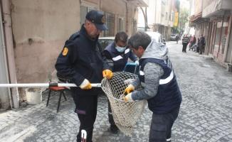 Edirne'de mahsur kalan 3 yavru kediyi itfaiye ekibi kurtardı