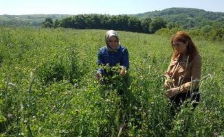 Kocaeli'de çiftçiye 38,5 milyon liralık gübre ve tohum desteği sağlanacak