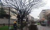 Gebze'de ağaçların bahar bakımı yapıldı