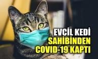 Evcil kedi sahibinden COVID-19 kaptı