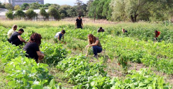 Üniversitede organik tarımı öğreniyorlar