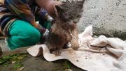 Yağmur kanalına sıkışan kediyi itfaiye kurtardı